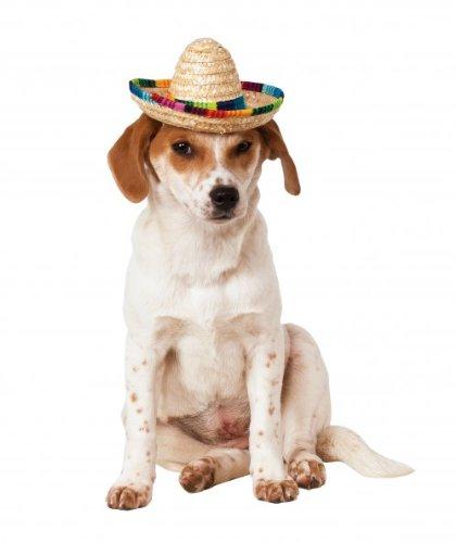 Rubies Costume Company Pet Sombrero Hat with Multicolor Trim, Small/Medium