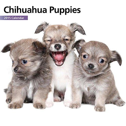Chihuahua Puppies Mini 2015 Wall Calendar