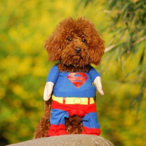 Alfie Pet by Petoga Couture – Superhero Costume Superman – Size: L