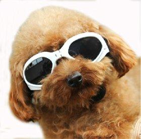 Pet Leso® Dog Goggles Stylish Doggie Puppy Sunglasses Windproof Protection Doggles – White