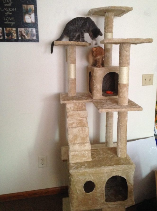 This cat tree is by far the best purchase we have made for our kittens.