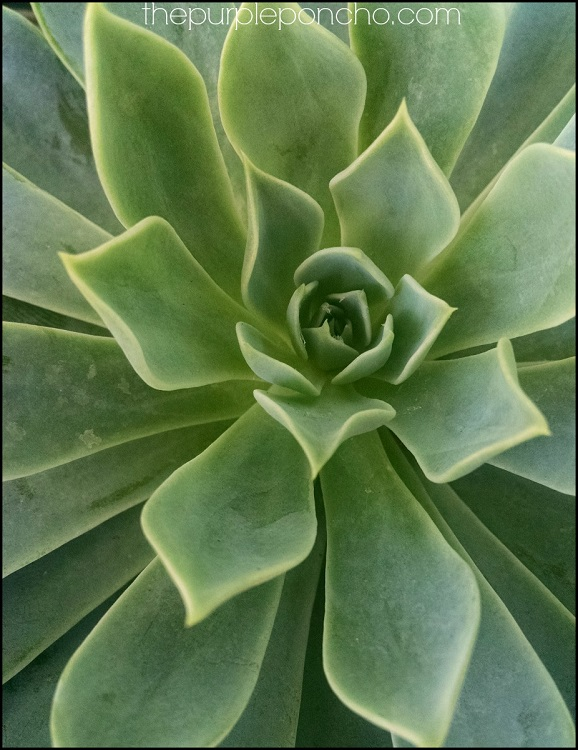 Green Succulent by The Purple Poncho