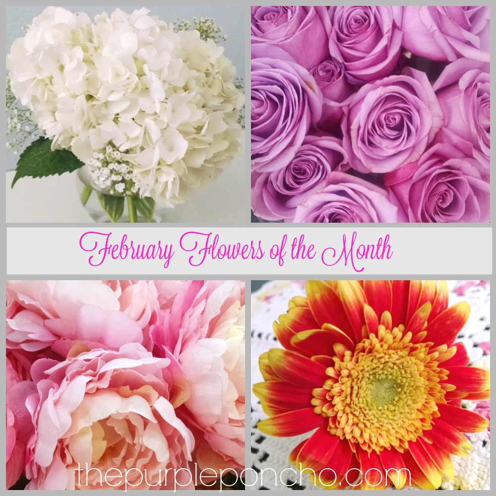 February Flowers Of The Month The Purple Poncho