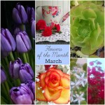 March Flowers Of The Month