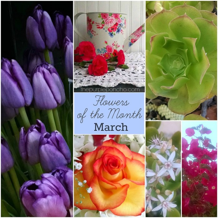 March Flowers Of The Month The Purple Poncho