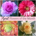 April Flowers Of The Month