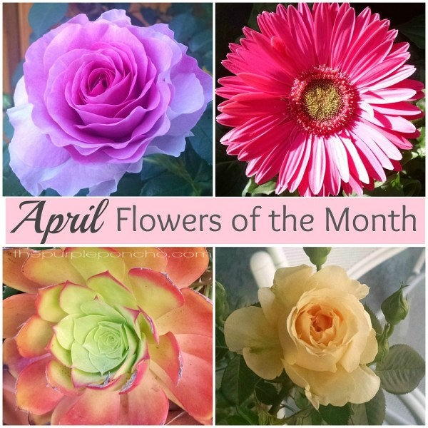 What Is The Flower For April: April Flowers Of The Month