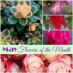 May Flowers Of The Month