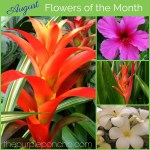 August Flowers Of The Month