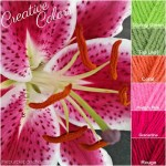 Creative Colors – Pink Lily Palette!
