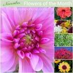 November Flowers Of The Month