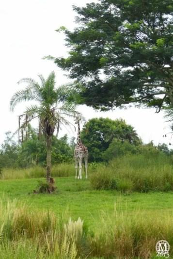 kilimanjaro-safaris-5