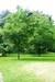 regents-park-london9