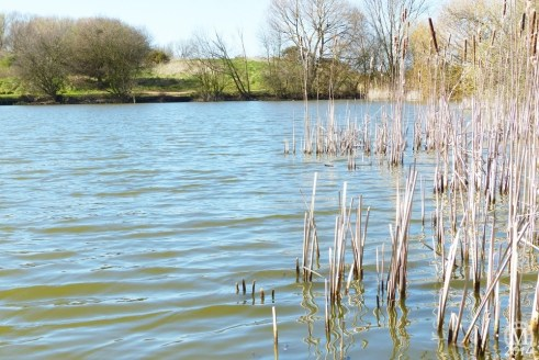 the-chase-nature-reserve-dagenham-essex16