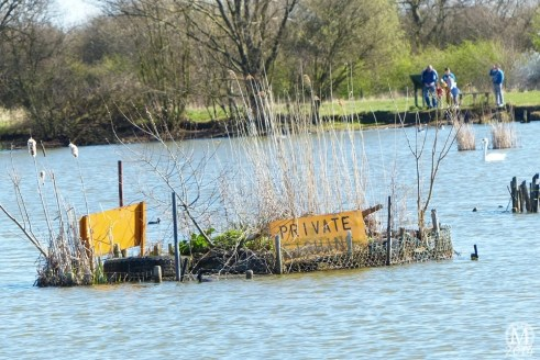 the-chase-nature-reserve-dagenham-essex31