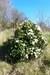 the-chase-nature-reserve-dagenham-essex5