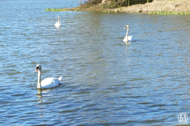 the-chase-nature-reserve-dagenham-essex65