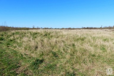 the-chase-nature-reserve-dagenham-essex84