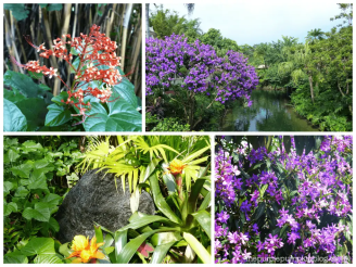Plants and Flowers at Magic Kingdom