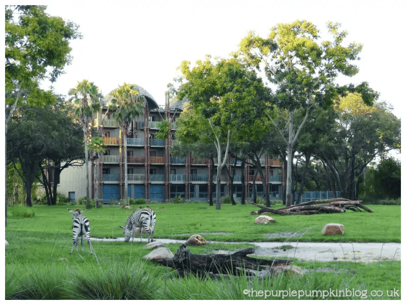 Animal Kingdom Lodge Savannah