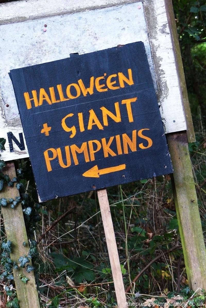 Norpar Barn Navestock Essex - Giant Pumpkins