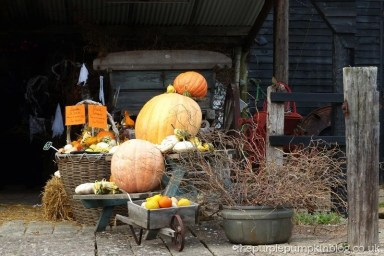 Norpar Barns Navestock Essex - Giant Pumpkins