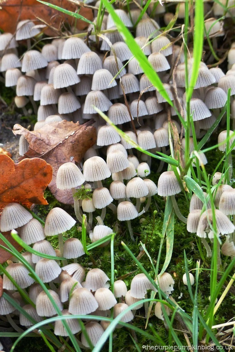 #FungiFriday