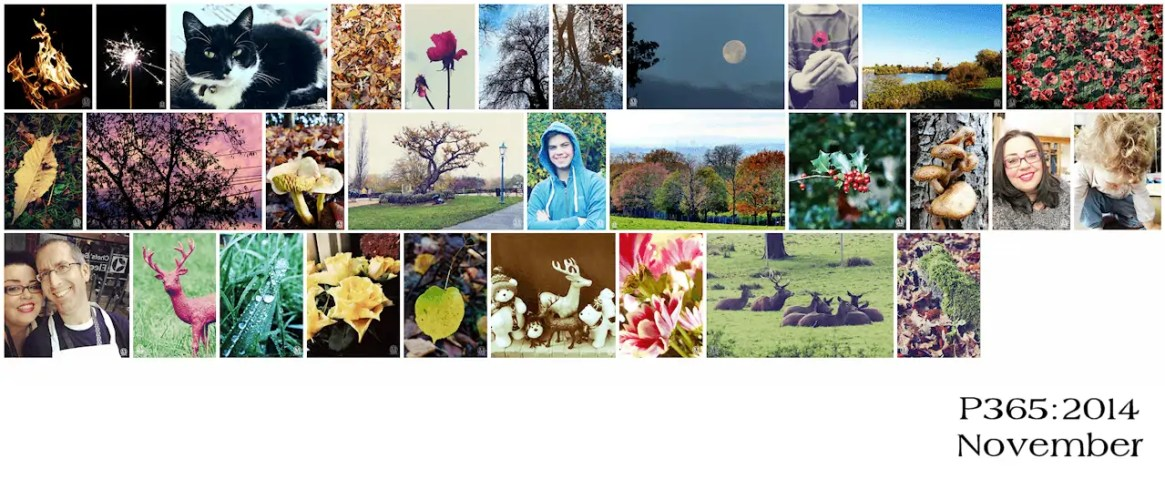 Project 365:2014 - November Roundup