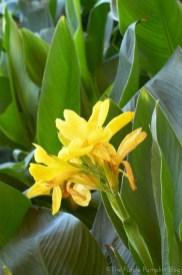Flowers at Epcot World Showcase