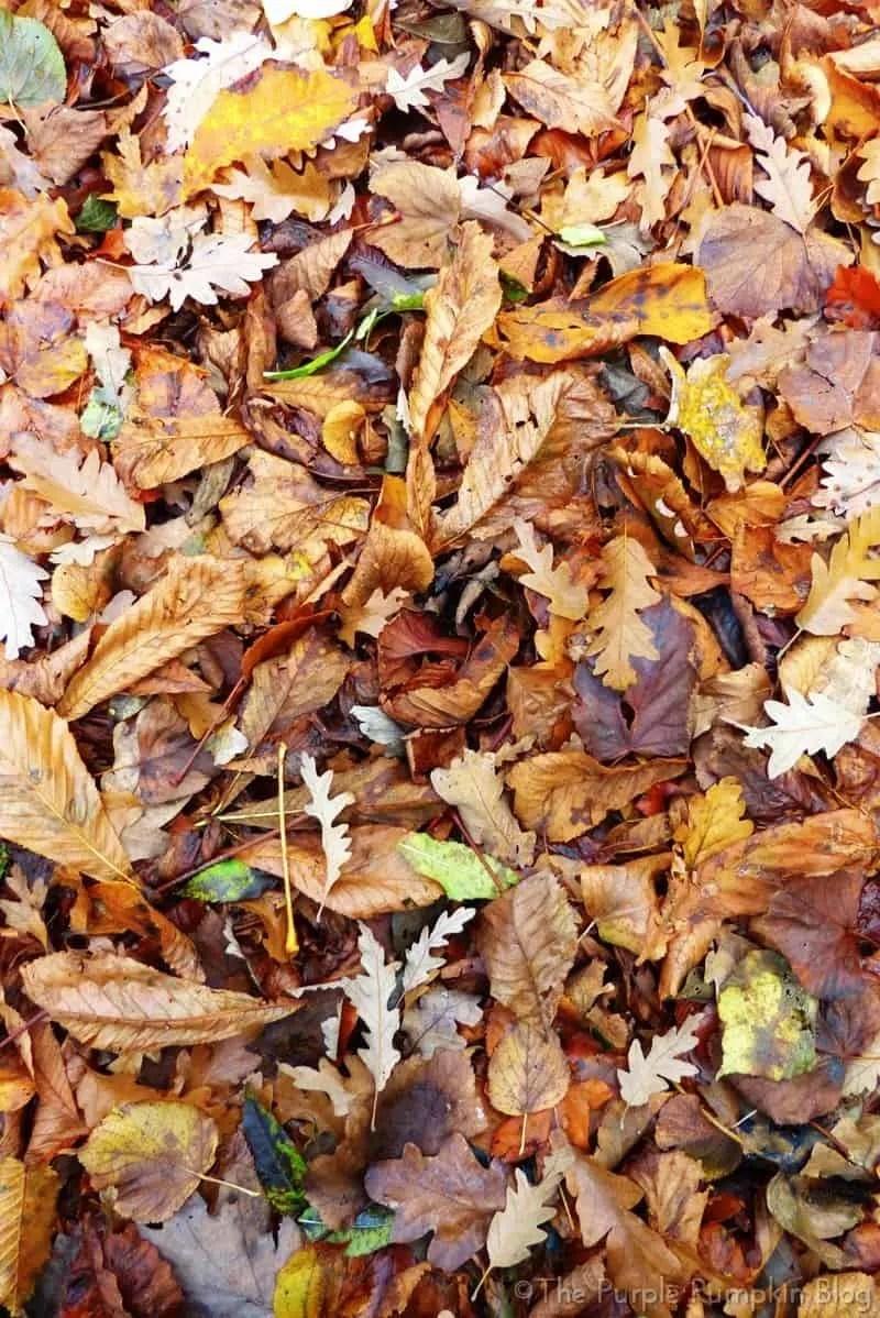 Bedfords Park Noak Hill Essex - Autumn