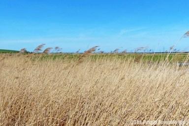 Rainham Marshes RSPB Nature Reserve
