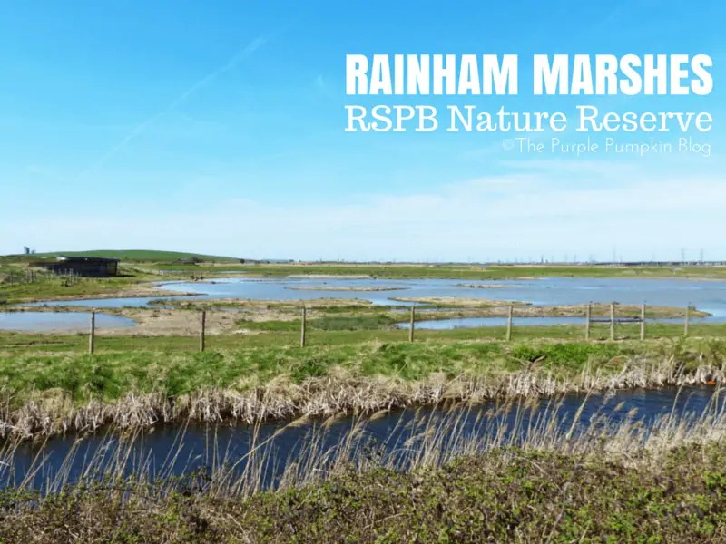 Rainham Marshes RSPB Nature Reserve Essex