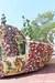 The Princess and The Frog - Festival of Fantasy Parade at Disney's Magic Kingdom