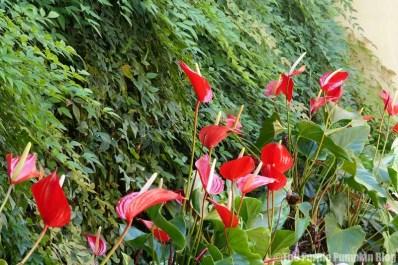 Flowers + Plants at Magic Kingdom