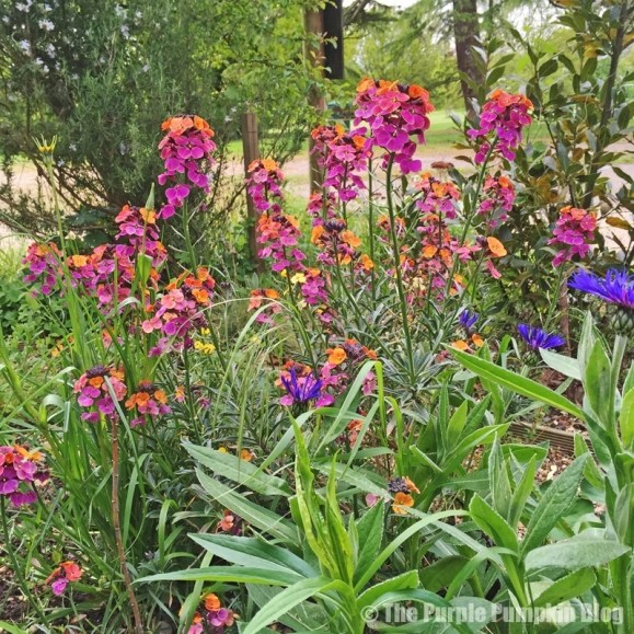 Flowers at Bedfords Park