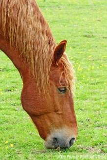 Hylands Horses