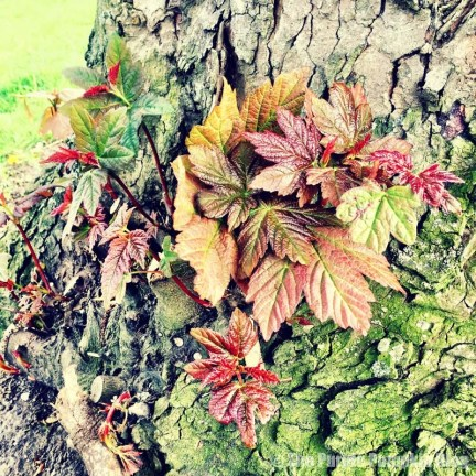 Plants and Leaves at Bedfords Park
