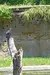 Vulture - Kilimanjaro Safaris at Animal Kingdom
