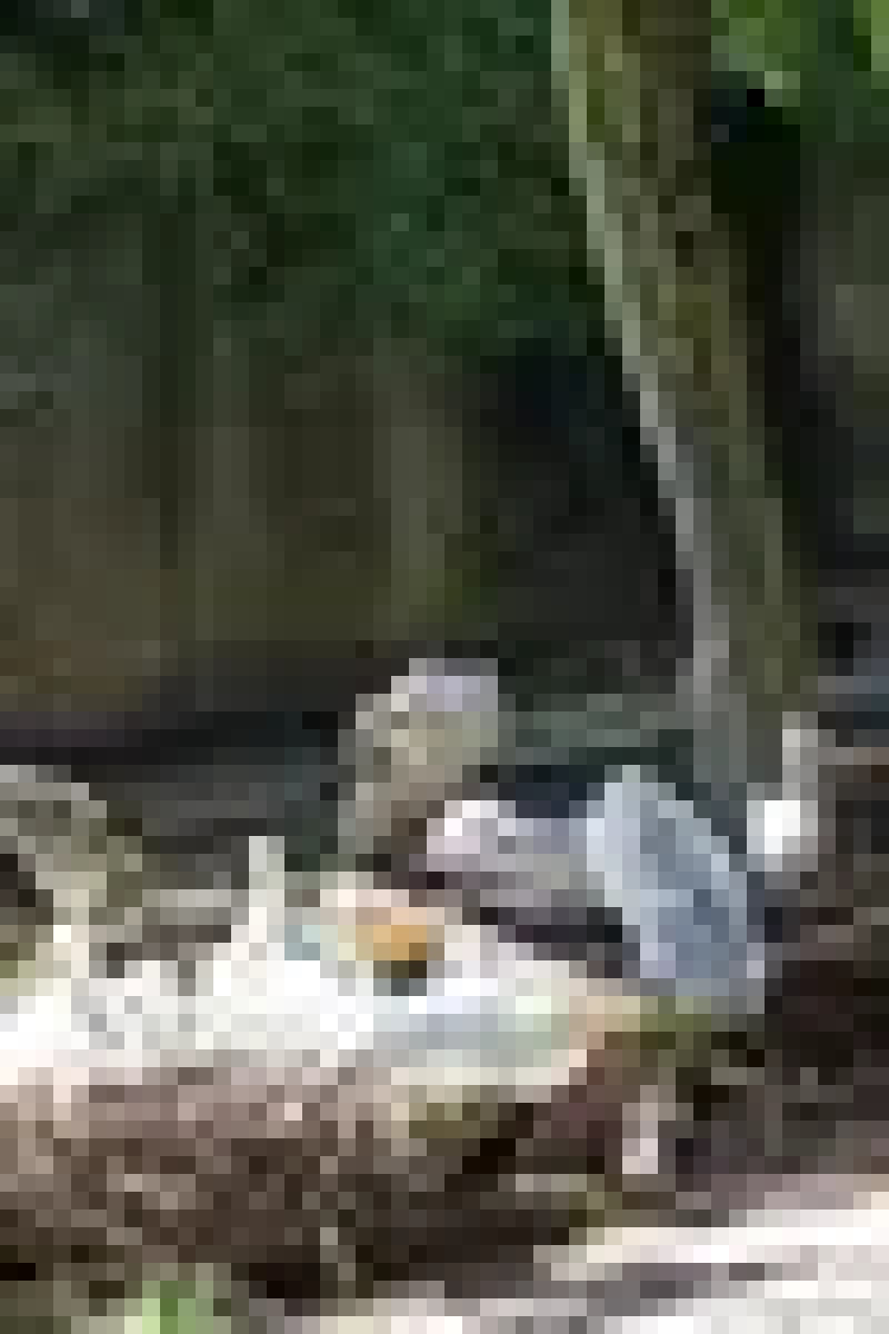Pink Backed Pelican - Kilimanjaro Safaris at Animal Kingdom