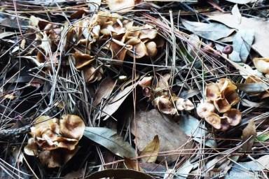 Fungi at Disney Magic Kingdom
