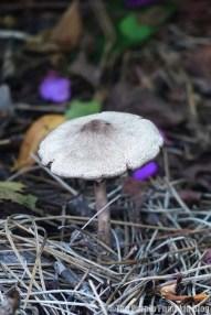 Fungi at Disney Old Key West