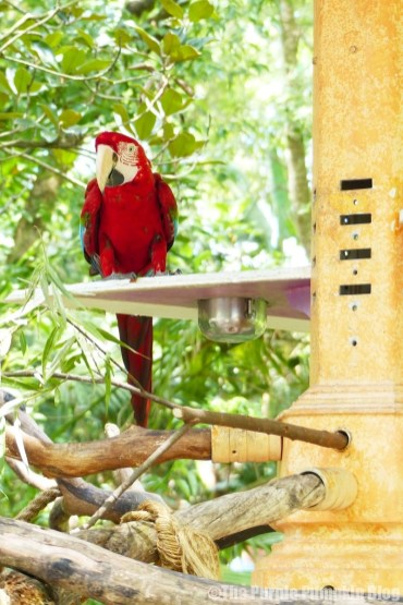 Parrot at Disney Animal Kingdom
