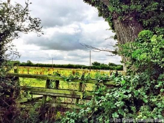 Fields near The Duchy Rag House B&B Wiltshire