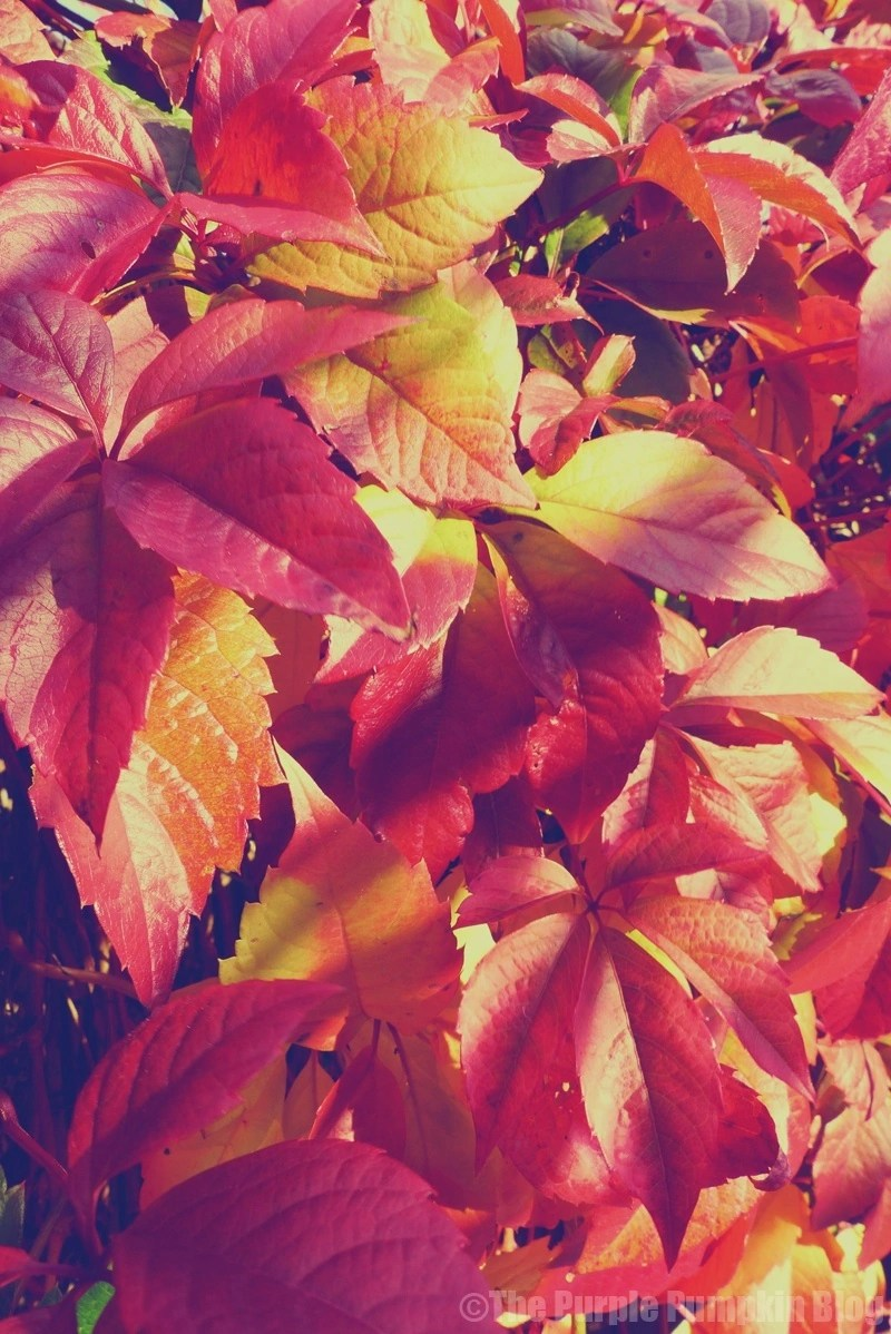Reasons To Love Autumn - The Changing Colours of the Leaves