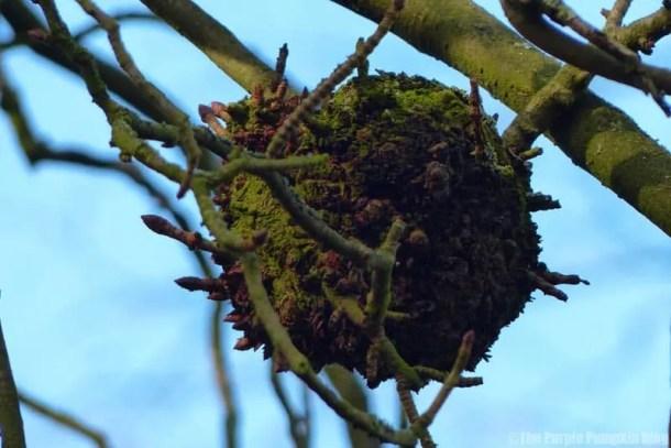 Winter in Bedfords Park, Romford, Havering, Essex