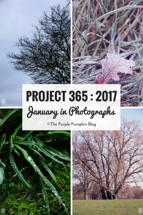 January in Photographs - Project 365 - 2017