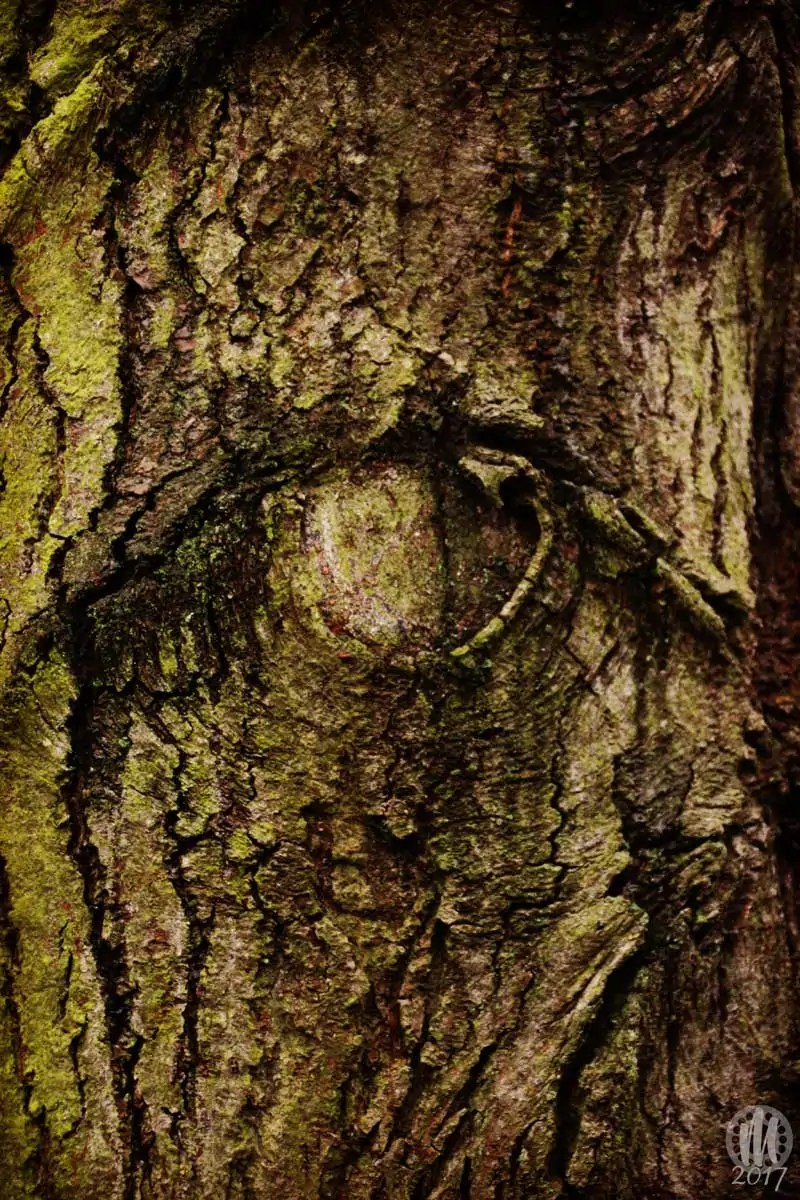 Project 365 - 2017 - Day 11: Tree bark knot