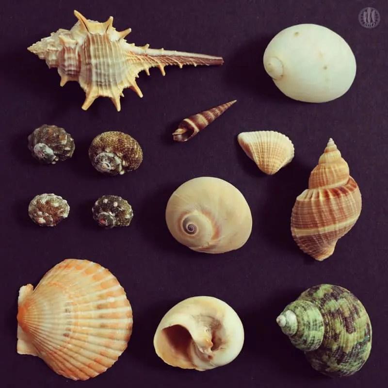 Project 365 - 2017 - Day 116 - Seashells