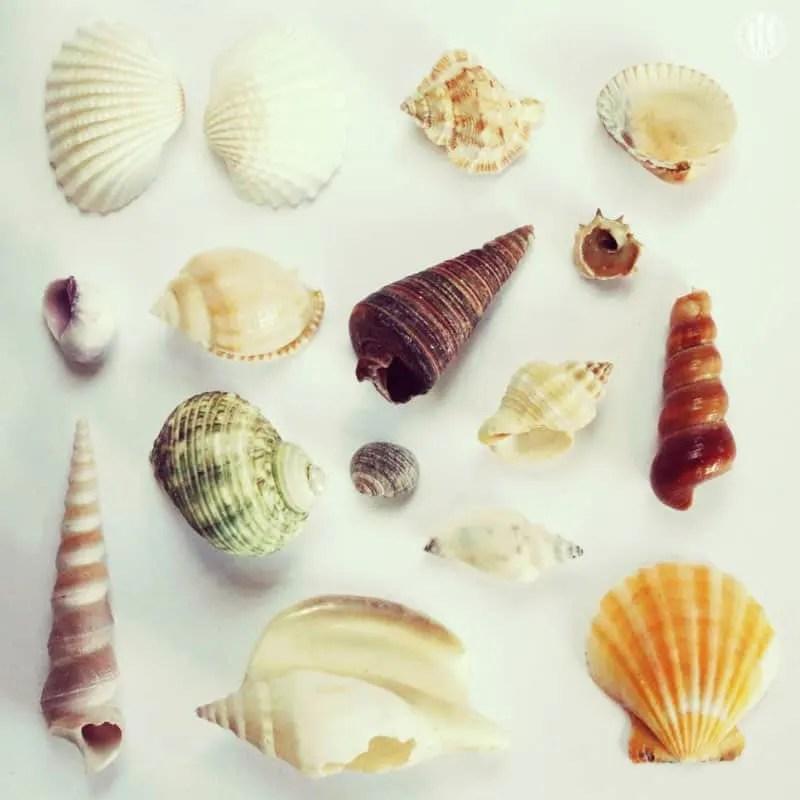 Project 365 - 2017 - Day 91 - Seashells