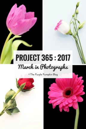Project 365 : 2017 - March